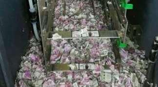 Miševi pojeli 15.000 evra