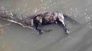 Konju svezali noge i bacili ga u rijeku Bosnu, uginuo u mukama