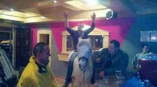 Veselo društvo: Sa konjem u kafanu!