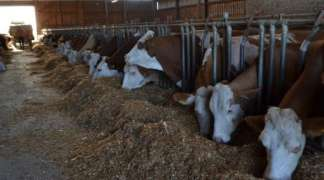 Sokolački mljekari u 2017. zaradili 1,6 miliona KM