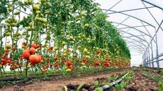 Savjetovanje o plasteničkoj proizvodnji za poljoprivrednike iz Istočnog Novog Sarajeva